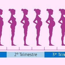 Etapas del Embarazo Mes a Mes