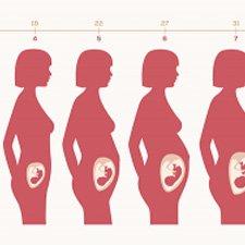 Etapas del Embarazo por Meses