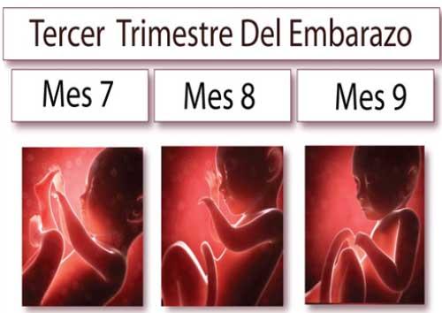 Tercer Trimestre de las Etapas del Embarazo